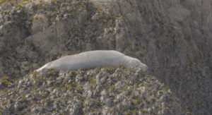 Seal Ungraded Image