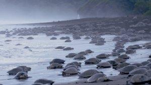 Turtles on beach Costa Rica