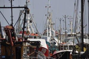 Fishing Fleet, Newlyn Harbour